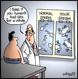 sperm-to-frog