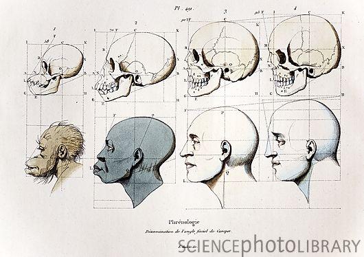 Ilustração de uma teoria da beleza de acordo com os ângulos do rosto. Obviamente, os negros  eram não só os mais próximos dos macacos como os mais distantes do ideal de beleza clássica.