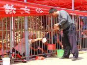 Os pedintes chineses, sob o sol e enjaulados