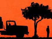 acacias-apais