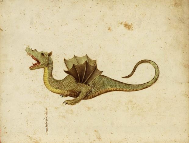 O dragão de Ulisse Aldrovandi. Para ver mais de sua vasta coleção, basta clicar na imagem (o site está em alemão, mas as imagens estão em ótima qualidade)