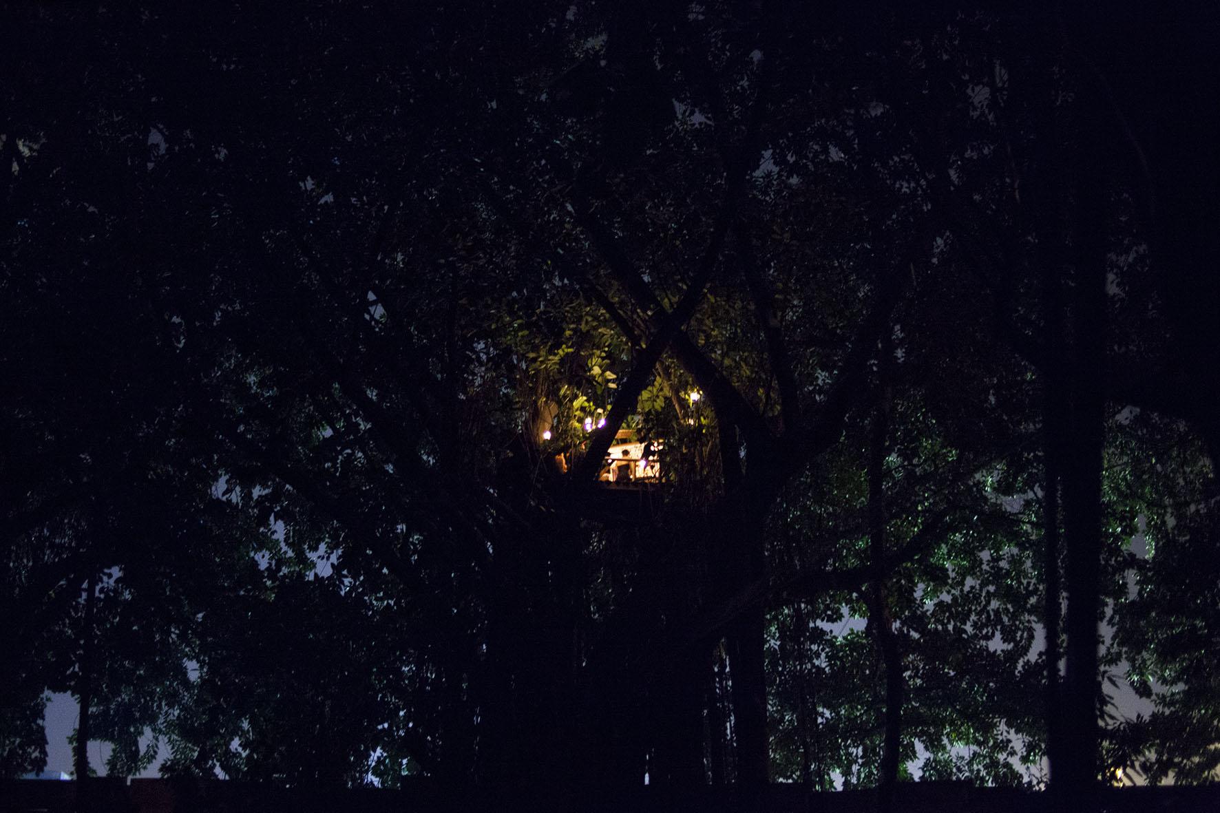 2.2the tree