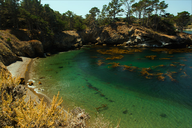 29 point lobos